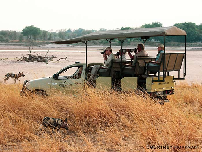 Game drive car with tourist watching animals